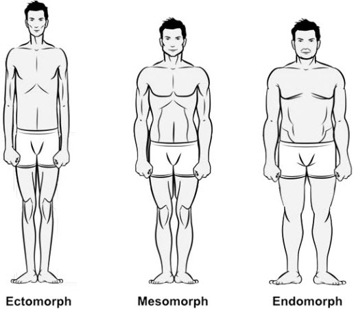 Plans Workouts & Diet pour Ectomorph, Mesomorph et Endomorph Types de corps